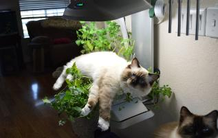 Plant, what plant?
